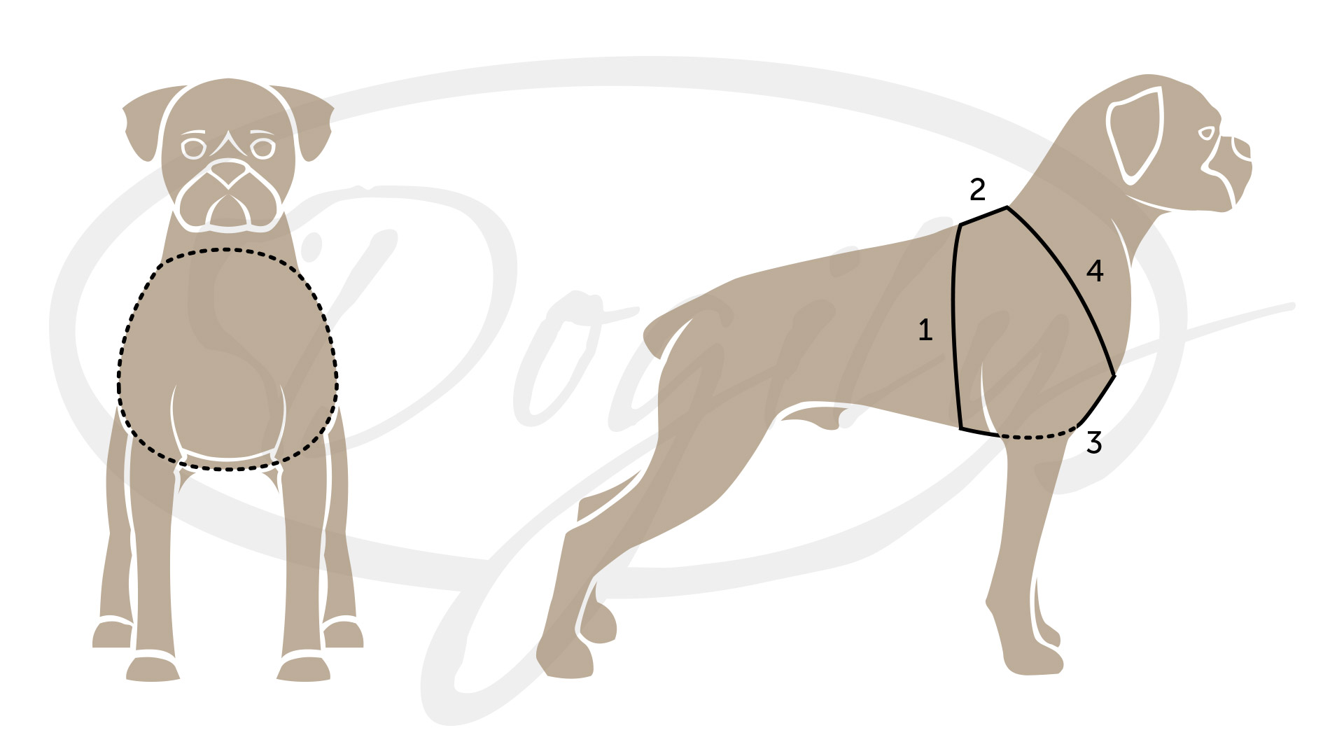 Dog harness measurement guide